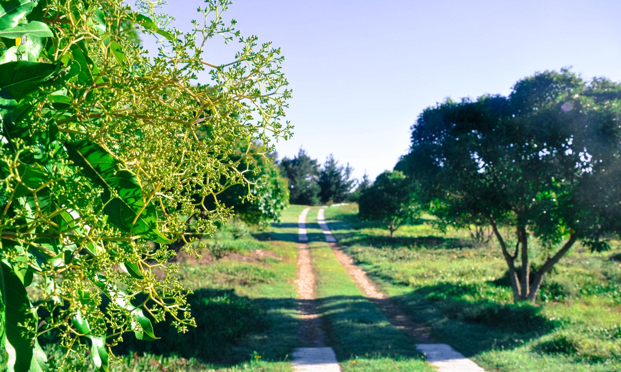 Equleni Farm